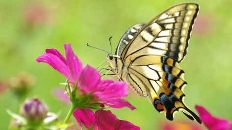 butterfly sunny day.jpg